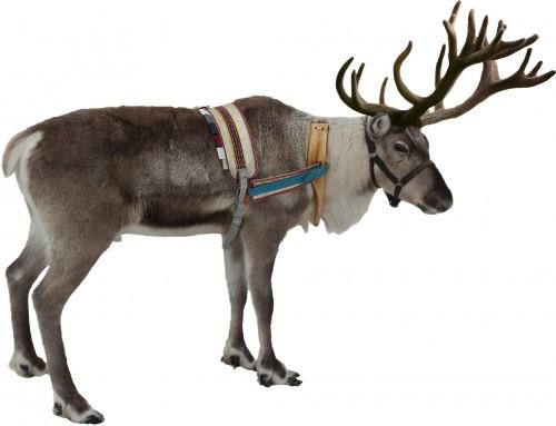 santa-facing-increasing-pressure-to-stop-using-reindeer