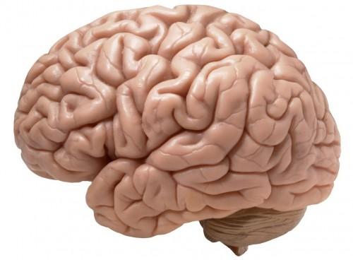 24 Ways to Keep Your Brain Sharp