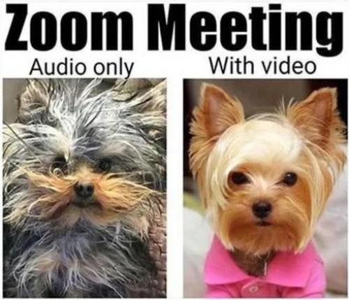 zoom meeting audio vs video-